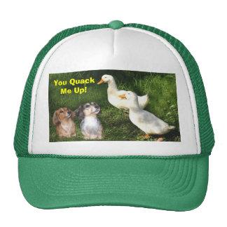 Dachshunds y gorra de los patos