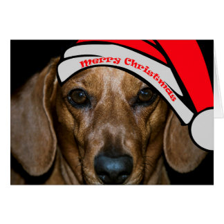 Dachsund's Merry Christmas Card