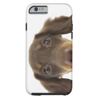 Dackel-Hund Braun 2