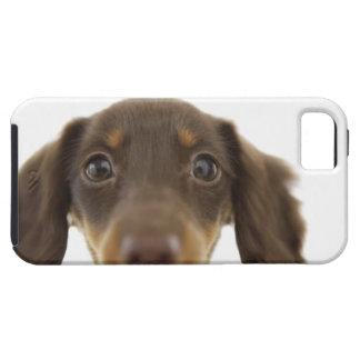 Dackel-Hund Braun 2 iPhone 5 Protector