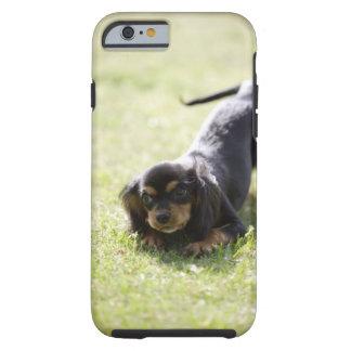 Dackelhund (Schwarzes) 2 Funda De iPhone 6 Tough
