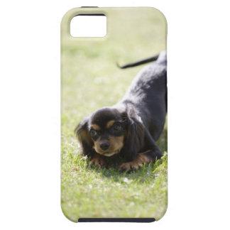 Dackelhund (Schwarzes) 2 iPhone 5 Coberturas