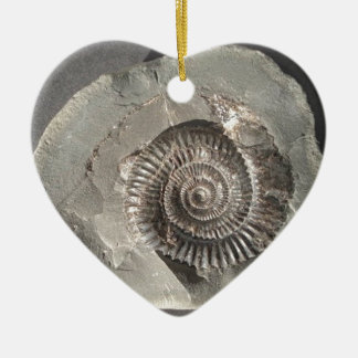 Dactylioceras ammonite in rock ceramic ornament