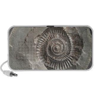 Dactylioceras ammonite in rock travelling speaker