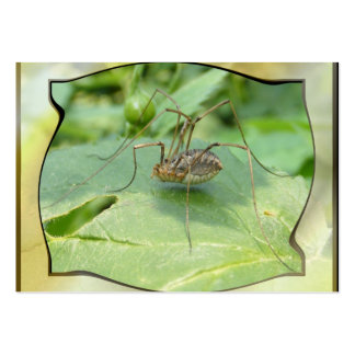 Daddy Long Legs ~ ATC Large Business Cards (Pack Of 100)