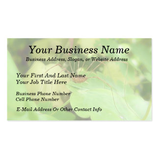 Daddy Long Legs In The Garden Double-Sided Standard Business Cards (Pack Of 100)