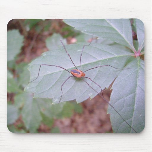 Daddy Long Legs Mouse Pad