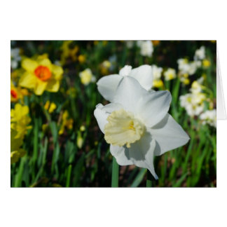 Daffo-dilly Note of Spring! Greeting Card