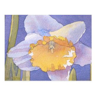 Daffodil 2003 postcard