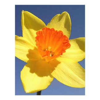 Daffodil Against Blue Sky Personalized Flyer