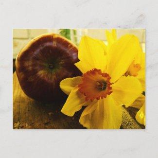 Daffodil & Apple Postcard postcard