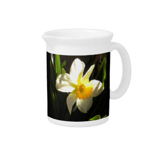 Daffodil at Daybreak Pitcher