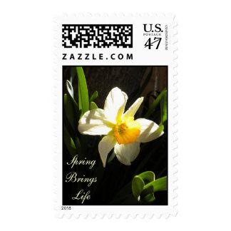 Daffodil At Daybreak Postage