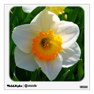 Daffodil at the Littlefield Garden in Orono, Maine Wall Decal