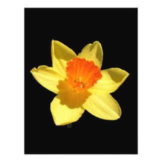 "Daffodil (Background Removed) 8.5"" X 11"" Flyer"