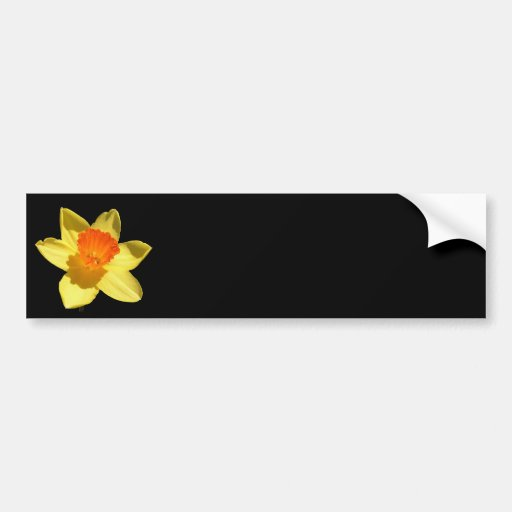 Daffodil (Background Removed) Bumper Stickers