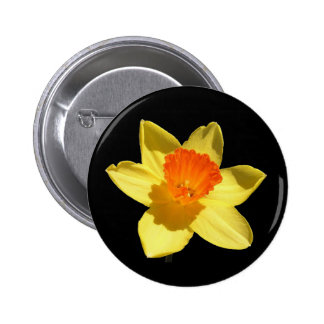 Daffodil (Background Removed) Pinback Buttons