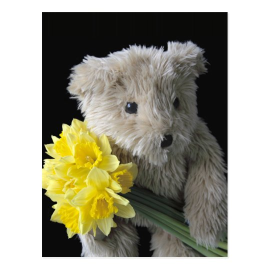 daffodil bear postcard