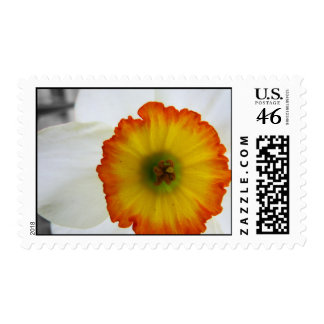 Daffodil Close Up Stamps