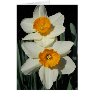 Daffodil Day Card
