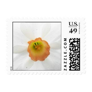 Daffodil Dreams Postage