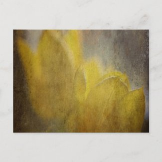 Daffodil Dreams postcard