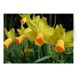 Daffodil easter card