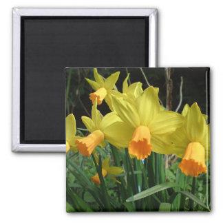 Daffodil easter card fridge magnet