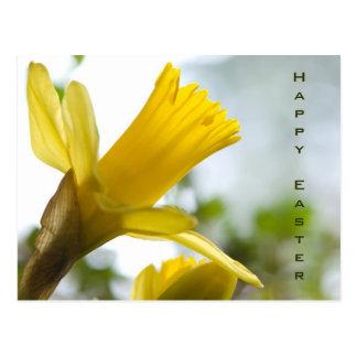 Daffodil  • Easter Postcard