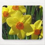 Daffodil Eye Mouse Pad