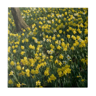 Daffodil Field Ceramic Tile