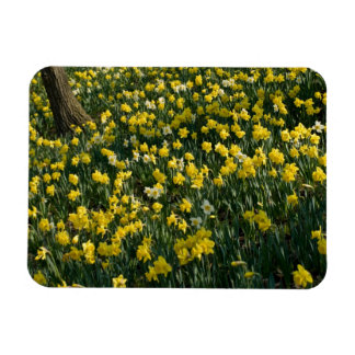 Daffodil Field Flexible Magnet