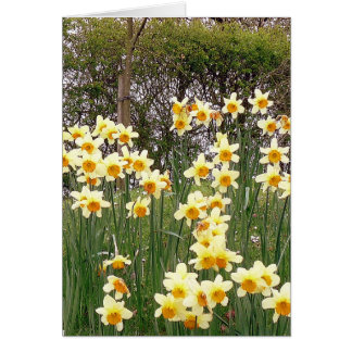 Daffodil Field In Springtime Card
