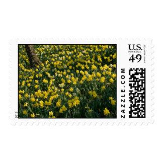 Daffodil Field US Postage Stamp