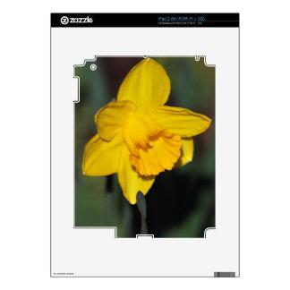Daffodil flower iPad 2 decals