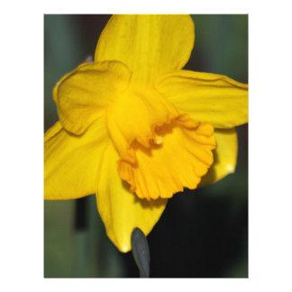 Daffodil flower letterhead