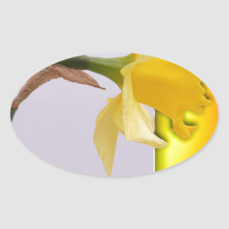 Daffodil flower out the frame oval sticker