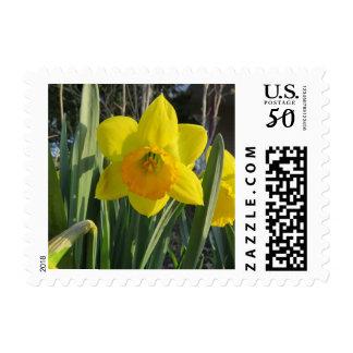 Daffodil Flower Postage