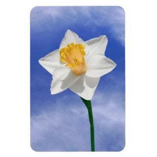 Daffodil Flower Spring Premium Magnet