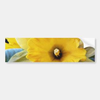 Daffodil Flowers Car Bumper Sticker