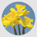 Daffodil Flowers stickers Yellow Floral Blue Sky