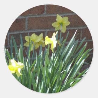 Daffodil Garden Classic Round Sticker