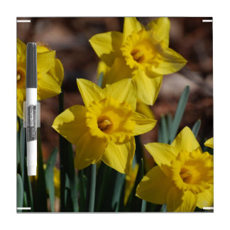 Daffodil Garden Dry Erase Whiteboards