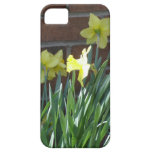 Daffodil Garden iPhone 5 Case