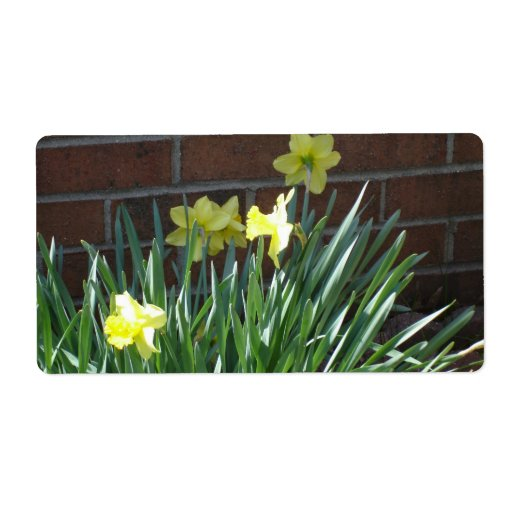 Daffodil Garden Personalized Shipping Labels