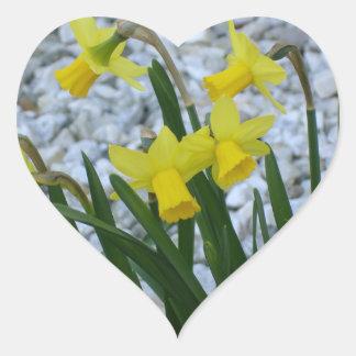 Daffodil Growing Heart Sticker