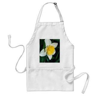 Daffodil, hardy perennial apron