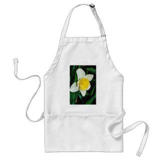 Daffodil, hardy perennial  flowers apron