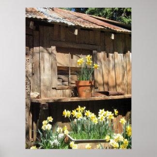Daffodil Hill Barn Poster