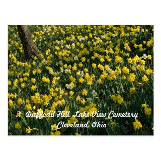 Daffodil Hill Cleveland Postcard